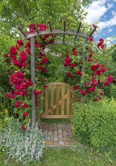 backyard arch garden