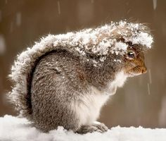 squirrel in the snow - Pixdaus