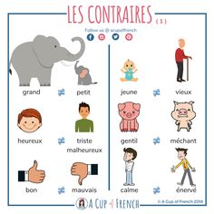 This infographic will help you to learn the opposites of some common French adjectives. Basic French Words, French Phrases, How To Speak French, Learn French, French Language Lessons, French Language Learning, French Lessons, German Language, Spanish Lessons