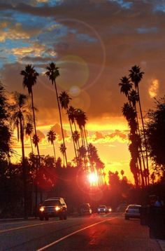 Palm Trees reachin for the sky at sunset - California Dreamin'