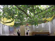 Solo en Japón! Oficinas con arrozales y huertos interiores!! GO Vídeo! ⊂(^(工)^)⊃ https://youtu.be/qJMZRIRkZWs
