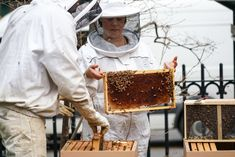 The delivery of 3 million Italian honeybees to a Manhattan park brought out 150 urban beekeepers who tend hives throughout New York City.