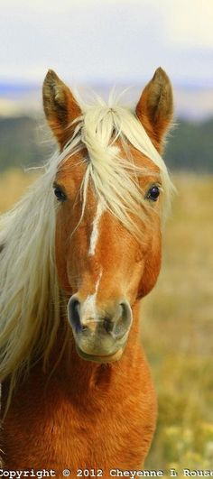 Horse / Beautiful Rescued mustang on t Love Moments