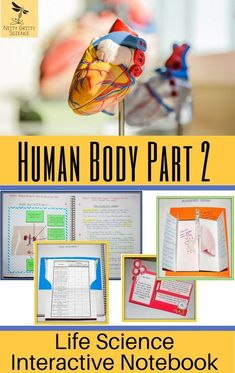 Human Body Part 2: Life Science Interactive Notebook includes the following concepts: Respiratory System Excretory System Cardiovascular System Blood Endocrine and Reproductive System