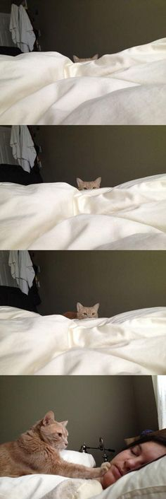 How Cat People Wake Up. Every morning. Truth.
