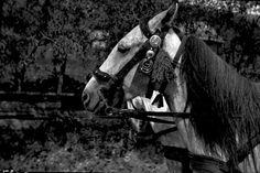 Származási helye » Helység: Gyimesközéplok (Lunca de Jos) » Megye: Hargita (Harghita)  Készítés ideje: 1961--06--00 Készítette: Vámszer Géza Lelőhely: Kriza János Néprajzi Társaság fotóarchívuma Hetalia, Hungary, Folk, Military, Horses, Animals, Animales, Popular, Animaux
