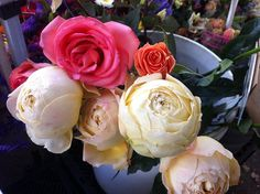 A bucketful of roses for spring