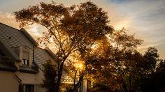 Herbst, Baum, Natur und Sonne