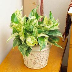 8 plantas que se adaptan a vivir con poca luz y en un ambiente como el del interior de nuestras casa. ¿Te las vas a perder?