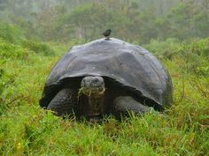 Turtles more closely related to birds than lizards and snakes, genetic evidence shows