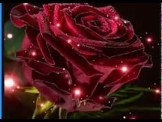 Rose, Flowers, Youtube, Plants, Pink, Plant, Roses, Royal Icing Flowers, Flower