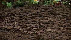 Äta löv och bajsa jord : Vad är jord?