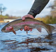 Keith Burtonwood with a fine shot of a UK river rainbow. Looking forward to working with Keith one of the UK's best wildlife photographers in our opinion. #sunrayflyfish #photographer #flyfishing