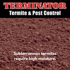 Signs of Termite Infestation - Terminator Termite & Pest Control Signs Of Termites, Termite Pest Control, Termite Inspection, Insect Pest, Warm, Learning, Blog, Blogging, Study