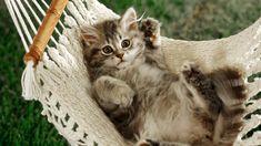 Resultados de la Búsqueda de imágenes de Google de http://newevolutiondesigns.com/images/freebies/animals-background-12.jpg
