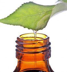 I poteri dell'olio di tea tree: 45 modi per utilizzarlo