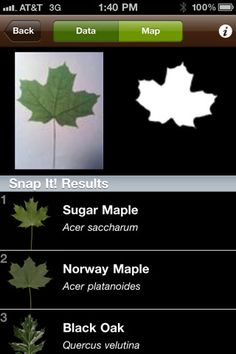 Leafsnap - iphone field guide uses visual recognition to help identify trees from photos of their leaves, fruit, or flowers