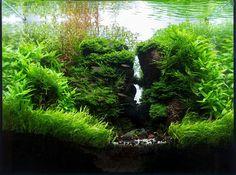 Aquascape - planted aquarium