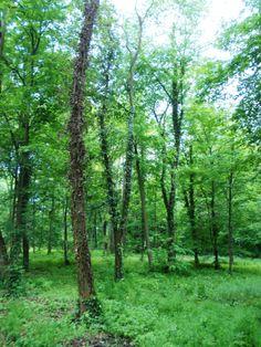 The green area around