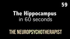 The Hippocampus in 60 seconds