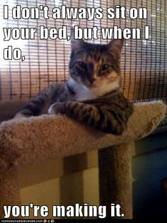 advice animals memes  - Animal Memes: I don't always sit on your bed, but when I do,  you're making it.