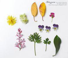 Spring Flowers and Leaves Botanical Original par thevysherbarium, $23.00