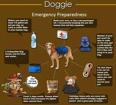 Doggie emergency preparedness