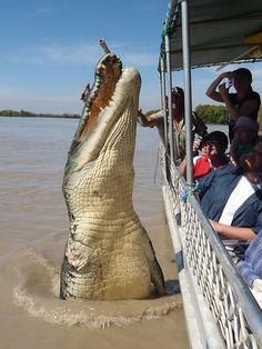 Fotos de locura en Australia!!