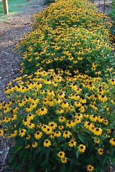 1000 images about lsu botanic gardens at burden on