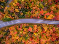 Picture of a road surrounded by trees in New Hampshire