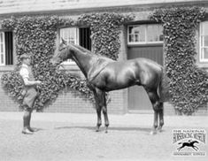 Cameronian(1928)(Colt)Pharos- Una Cameron By Gainsborough. 4x4x5x5 To St Simon, 4x5x5 To Hampton, 5x5x5 To Galopin. 9 Starts 5 Wins 3 Thirds. Won 1931 Epsom Derby(Eng), 2000 Guineas(Eng), St James's Palace S(Eng), Champion S(Eng), 3rd Coronation Cup(Eng). Died In 1955.