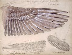 Edward Burne Jones, Drawing of Wings