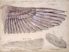 Edward Burne Jones, Drawing of Wings