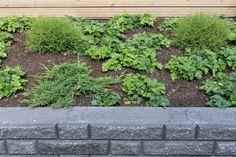 Terrace, Garden, Plants, Patio, Garten, Terraces, Flora, Plant, Lawn And Garden