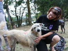 Your free 'Click' today helps care for 40 Dogs in Thailand.
