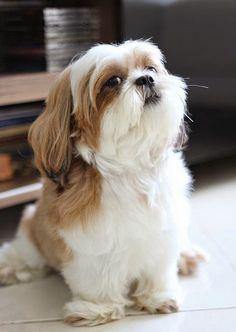 Top 5 Cutest Dog