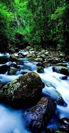 Creek at Lamington National Park. Gold Coast. Queensland. Australia