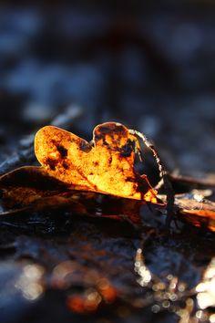 Lone leaf on muddy path, Shipley Glen