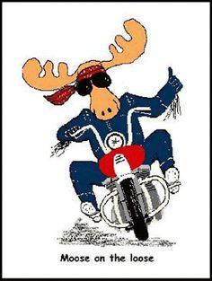 Buzzard grupo de motos de próstata
