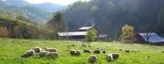 East Fork Farm | Farm * Cottages * Gristmill - NC
