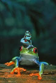 Frog families stick together :)