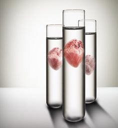 Growing hearts from using human stem cells and pig heart protein skeletons....amazing!