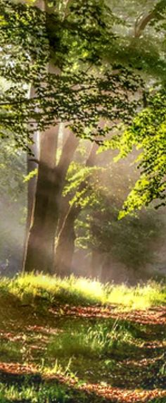 Walk In The Woods, Sun Rays, Fantastic Art, Waterfalls, Roads, Sunlight, Paths, Nature Photography, Places To Visit