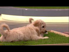 Carnilo - das Indoor-Hundeklo - Das Ding des Jahres - YouTube
