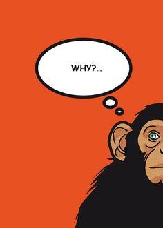 #monkey #why