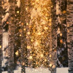 snow and its beautiful golden bokeh♥