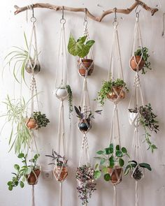 Plant Wall Decor, Hanging Plant Wall, House Plants Decor, Diy Hanging, Hanging Terrarium, Hanging Basket, Big Indoor Plants, Little Plants, Pot Plante