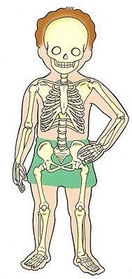 """Proyecto : """"El cuerpo humano"""""""