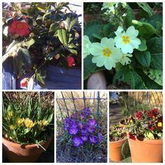 Spring flowers in my garden