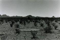 * 3: LE XX°S CHAPITRE 47 : LAND ART ET EARTH ART
